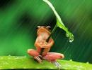 Ếch ga lăng che mưa cho bạn tình