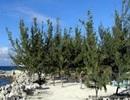 Nấm cộng sinh trong rễ cây trồng tác động lớn đến các-bon trong khí quyển