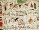 Giải mã những chữ đầu tiên trong cuốn sách bí ẩn nhất thế giới