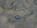 Phát hiện dấu chân người cách đây 800.000 năm