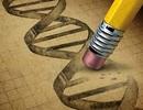 Xóa một gen đơn có thể làm giảm lượng mỡ và kéo dài tuổi thọ