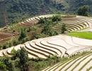 """""""Di tích quốc gia"""" ruộng bậc thang Sa Pa đẹp nổi tiếng thế giới"""