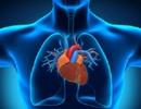 Chất xơ giúp người bệnh tim sống lâu hơn