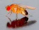 Nhiệt độ ảnh hưởng tới giới tính của côn trùng
