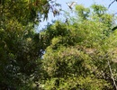 Xuân về dạo chơi trên những vườn chim