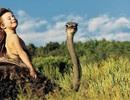 Bộ ảnh tuyệt đẹp về cô bé sống giữa rừng già Châu Phi