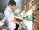 Đề nghị tiêu hủy 8 tấn cá biển chứa độc tố vượt ngưỡng