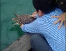 Rùa quý hiếm suýt lên bàn nhậu