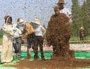 Lập kỷ lục khi cho hơn 637.000 con ong đậu trên người