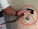 Kinh hãi phát hiện rắn mắc kẹt sau ổ cắm điện trong nhà