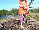 Thót tim khoảnh khắc cô bé dùng tay không bắt rắn khi đang kiếm củi