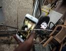 Nhiều thiếu niên Syria bất chấp nguy hiểm để săn lùng Pokemon