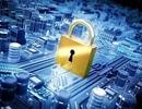 Điều kiện cấp Giấy phép kinh doanh sản phẩm, dịch vụ an toàn thông tin mạng
