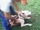 Bị bắt vì đăng video tra tấn chó lên mạng xã hội