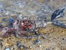 Xôn xao hình ảnh xác chết người cá trôi dạt vào bờ biển nước Anh