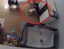 Thót tim khoảnh khắc cậu bé 9 tuổi lao mình đỡ em trai rơi từ trên cao