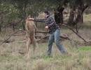 """""""Đấu tay đôi"""" với kangaroo để giải cứu chó cưng bị """"bắt nạt"""""""