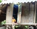 Cậu học trò nghèo buổi đi học, buổi chăm mẹ liệt giường
