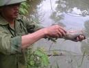 Công ty luyện quặng gây chết cá bị phạt 320 triệu đồng