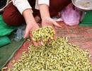 """Thăm chợ quê bán """"đặc sản"""" côn trùng ở Hòa Bình"""
