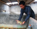 Lão nông thu tiền tỷ mỗi năm từ nuôi ếch bằng thảo dược