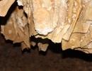 """Tận thấy nhũ đá trong hang động trên vịnh Hạ Long bị """"đánh cắp"""""""