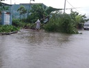 Đà Nẵng: 500 cây xanh gãy đổ vì bão số 3