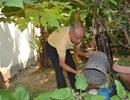 Đà Nẵng: Người dân chủ động phòng chống vi rút Zika