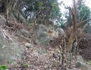 Thêm một vụ phá rừng trên Sơn Trà