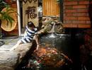 """Độc đáo cafe cá Koi """"ngàn đô"""" ở Sài Gòn"""