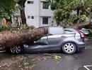 """Bảo hiểm chi hơn 4,6 tỷ đồng bồi thường xe """"bẹp"""" trong cơn giông vừa qua"""