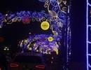 Con đường đẹp nhất Hà Nội rực rỡ chào năm mới