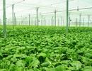 Tổng Giám đốc VinEco: Mục tiêu lớn nhất là lan tỏa văn hóa làm nông nghiệp an toàn