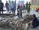 Lại phát hiện gần 1 tấn ngà voi giấu tinh vi trong gỗ