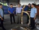 Tiếp tục phát hiện hơn nửa tấn ngà voi buôn lậu qua cảng Cát Lái