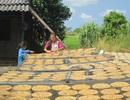 Làng ép chuối khô hối hả vào Xuân