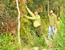 Gần 100% diện tích rừng Quốc gia U Minh Hạ đang ở cấp cháy cực kỳ nguy hiểm