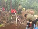Cháy tại rừng U Minh Hạ do sét đánh