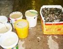 Bắt quả tang tôm bơm tạp chất tại một công ty chế biến thủy sản