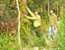 Gần 400 tỷ đồng bảo tồn và phát triển Vườn Quốc gia U Minh Hạ