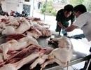 """TPHCM: Báo động tình trạng thịt động vật """"ngậm"""" kháng sinh"""