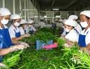 Xuất khẩu thực phẩm sạch, nhập khẩu thực phẩm bẩn