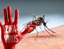 TPHCM: 80% số quận huyện bị vi rút Zika tấn công