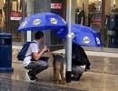 Cặp đôi đứng dưới mưa tầm tã che mưa cho chó khiến triệu người xúc động