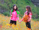 Vì đâu Hà Giang có sức hấp dẫn đặc biệt với giới trẻ?