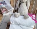 Câu chuyện về chú thỏ bị bỏ quên và cách làm du lịch đáng suy ngẫm