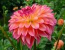 Vẻ kiêu sa của những loài hoa đẹp nhất thế giới