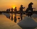 Nhiếp ảnh gia ngoại quốc say mê với cảnh lao động ở Việt Nam