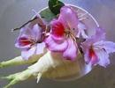 Nộm hoa ban - món ngon giản dị của người Thái