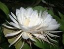 Những loài hoa đẹp và hiếm có nhất thế giới